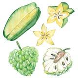 水彩夏天汇集异乎寻常的热带水果 在白色背景的手画异乎寻常的coctails 图库摄影