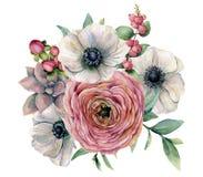 水彩多汁植物、毛茛属和银莲花属花束 手画花、eucaliptus叶子、莓果和多汁植物 库存照片