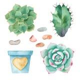 水彩套仙人掌,多汁植物,小卵石,花盆 皇族释放例证