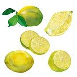 水彩套新鲜的柠檬 皇族释放例证