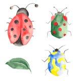 水彩套昆虫,瓢虫,臭虫,与叶子的甲虫在白色背景 皇族释放例证