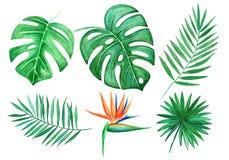 水彩套热带叶子隔绝了在白色背景的元素 r Monstera叶子,鹤望兰,棕榈 皇族释放例证