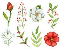 水彩套花和枝杈 库存照片