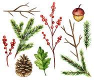 水彩套花和枝杈 库存图片
