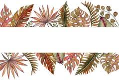 水彩套葡萄酒花卉热带自然元素 异乎寻常的花、枝杈和叶子 植物的明亮的经典之作 库存照片