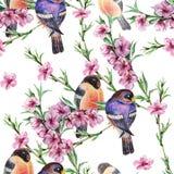 水彩开花有鸟红腹灰雀的佐仓 在白色背景的花卉无缝的样式 库存照片