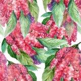 水彩开花紫藤 设计的花卉无缝的样式 库存照片