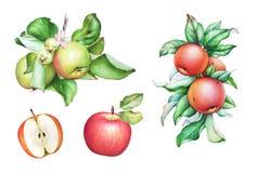 水彩手拉的苹果树分支用苹果和叶子 免版税库存图片