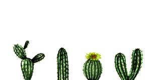 水彩手画异乎寻常的绿色仙人掌收藏 设置热带植物 墨西哥样式背景模板 皇族释放例证