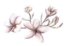水彩手画handpaint套对象 桃红色和purpl 库存图片