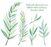 水彩春天夏天汇集植物的叶子,分支,植物 免版税库存照片