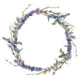 水彩春天花圈 手画边界用淡紫色、杨柳和树枝与在白色隔绝的叶子 向量例证