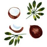 水彩有机结构的在白色背景隔绝的椰子和棕榈树 皇族释放例证