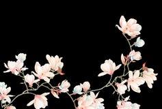 水彩木兰花和分支 免版税库存图片