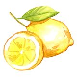 水彩柠檬 库存图片