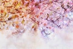 水彩样式和樱桃树的抽象图象开花 库存例证