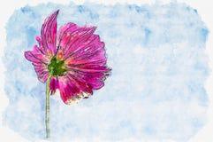 水彩桃红色波斯菊花的绘画例证在蓝色s的 库存例证