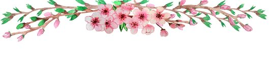 水彩模板,构筑由与绿色铸件和桃红色花的完善的佐仓分支 库存例证