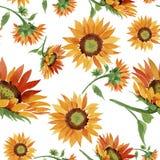 水彩橙色向日葵花 花卉植物的花 无缝的背景模式 向量例证