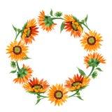 水彩橙色向日葵花 花卉植物的花 框架边界装饰品正方形 库存例证