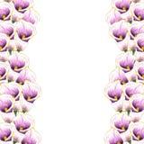水彩水芋属 花 背景细部图花卉向量 花束弓形象花纹花样无缝小 种植热带 背景查出的白色 向量例证