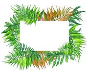 水彩热带叶子和花花圈! 水彩异乎寻常的花卉卡片 与棕榈树的手画热带框架离开和t 库存照片