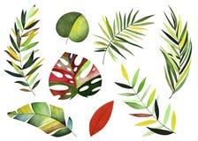 水彩热带收藏 库存例证