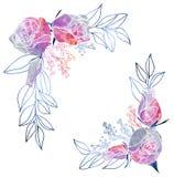 水彩玫瑰和含羞草框架 免版税库存图片