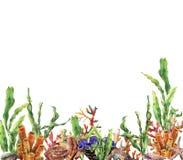 水彩珊瑚礁边界 与昆布属植物分支,海星, tridact,软体动物的手画水下的例证和 库存例证