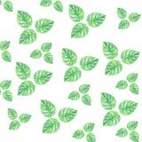 水彩留下夏天绿色样式隔离柔和的画的墙纸 皇族释放例证