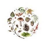 水彩秋天印刷品 手画蘑菇、花揪、秋天叶子、树枝、杉木锥体、被隔绝的莓果和橡子  库存例证
