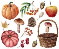 水彩秋天收获明亮的集合 手画南瓜,叶子,蘑菇,花揪,苹果,锥体,橡子,被编织的篮子 皇族释放例证