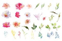 水彩红色和桃红色和绿色花的汇集weddig卡片的,邀请,装饰品 免版税图库摄影