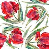 水彩红色郁金香 无缝花卉的模式 库存图片