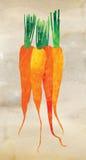 水彩红萝卜例证 库存图片