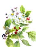 水彩结构的花和莓果和绿色离开 免版税库存照片