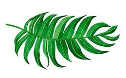 水彩绘画在白色背景隔绝的绿色事假 热带水彩手画的例证 wallp的异乎寻常的叶子 皇族释放例证