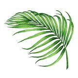 水彩绘画椰子,棕榈叶,绿色离开 免版税库存照片
