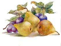 水彩绘画: 梨和李子