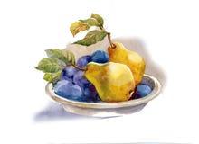 水彩绘画: 梨和李子 免版税库存照片