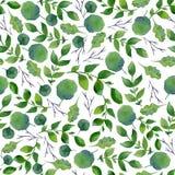 水彩绿叶无缝的纹理  新春天叶子和树枝 库存图片