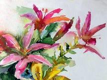 水彩艺术背景五颜六色的自然夏天红色桃红色美丽的花开花百合从事园艺 库存图片