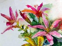水彩艺术背景五颜六色的自然夏天红色桃红色花开花百合从事园艺 库存图片