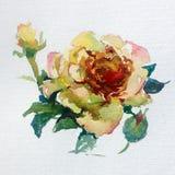 水彩艺术背景五颜六色的花上升了 免版税图库摄影
