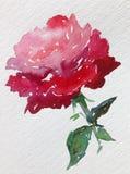 水彩艺术背景五颜六色的花上升了 免版税库存照片