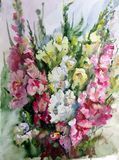 水彩艺术背景五颜六色的花剑兰 免版税库存照片
