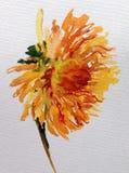 水彩艺术背景五颜六色的花大丽花庭院 免版税库存图片