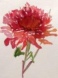 水彩艺术背景五颜六色的花大丽花庭院 库存图片