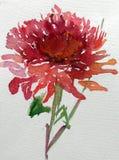 水彩艺术背景五颜六色的花大丽花庭院 免版税库存照片