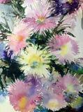 水彩艺术背景五颜六色的花翠菊 免版税库存图片